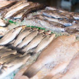 Cassette pesce